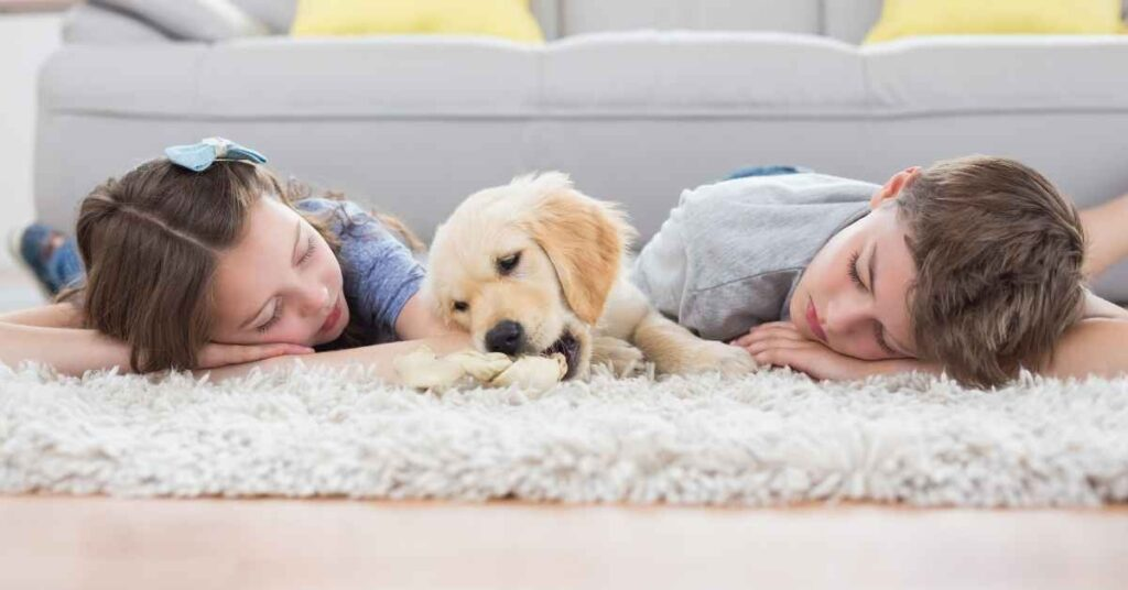 best rugs for dogs